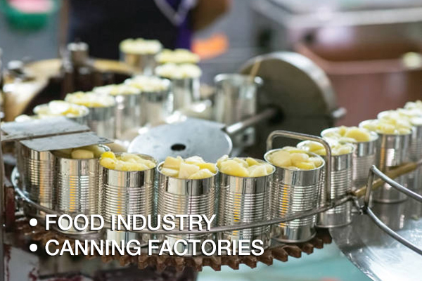 A shot of canned pineapples in production line on conveyor belt awating to be seamed by can seamer. This shot was taken in Pranburi (30km from Hua-Hin) district, Prachuap Khiri Khan Province, Thailand, Southeast Asia